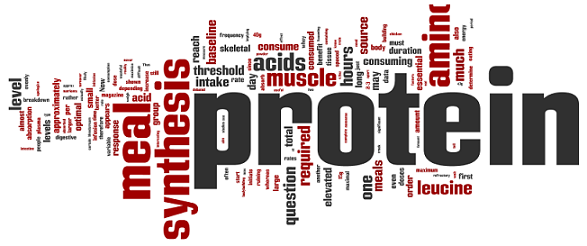 Image result for protein the word