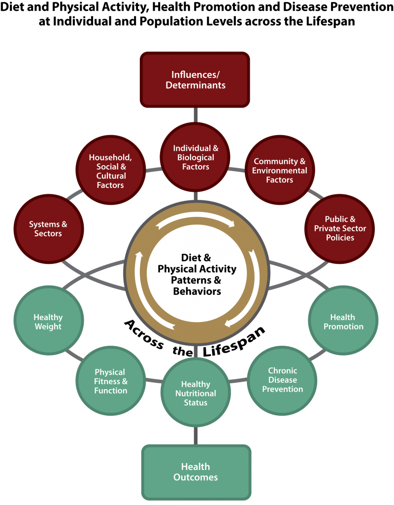 The DGAC recognized that a dynamic interplay exists among individuals' nutrition, physical activity, and other health-related lifestyle behaviors and their environmental and social contexts. Acknowledging this, the DGAC created a conceptual model based in part on the socio-ecological model to serve as an organizing framework for its report. The figure above shows how these personal, social, organizational, and environmental contexts and systems interact powerfully to influence individuals' diet and physical activity behaviors and patterns and how diverse health outcomes result from this dynamic interplay.