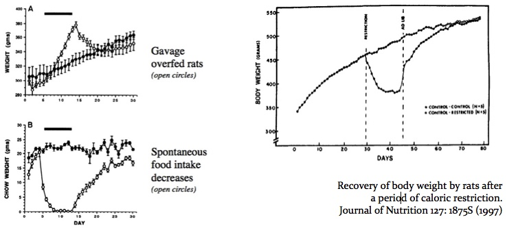 Daily body weight (A) and weight of chow (B) consumed spontaneously during 8 h (B) in a group of 7 gavage overfed (open symbols) and 5 control (closed symbols) rats. Solid bar represents the period of gavage overfeeding. Am J Physiol Regul Integr Comp Physiol 259:R1148-R1155, 1990