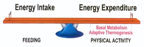 04 Energy Balance