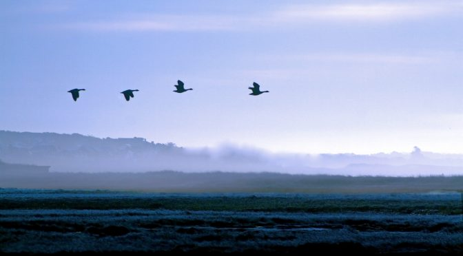 Calling to You Like the Wild Geese