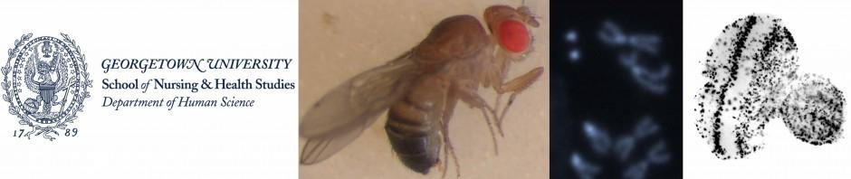 fly lab 8